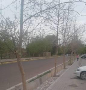 Funcionarios y parque arbóreo / por: Arnaldo Roatta