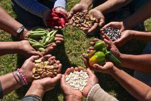 Soberanía alimentaria y medio ambiente / por: Hugo Bayón Cervero
